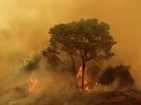Pantanal em chamas: como é o bioma e como ele é cobrado nas provas